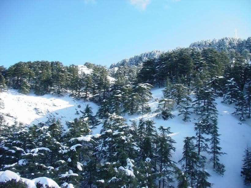 مناطق ثلجية من السياحة الجزائرية   A7