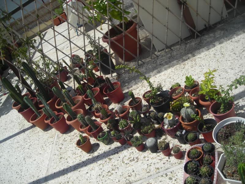 My cacti + succulents DSCN5032