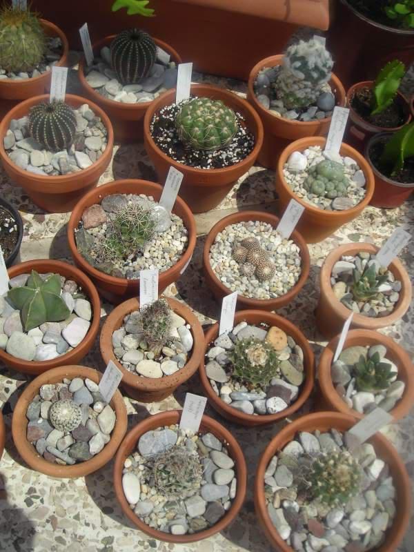 My cacti + succulents DSCN5428