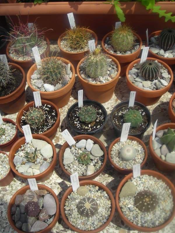 My cacti + succulents DSCN5429