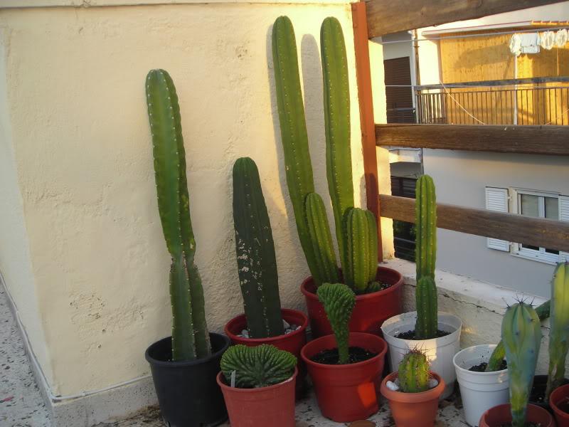 My cacti + succulents DSCN6198