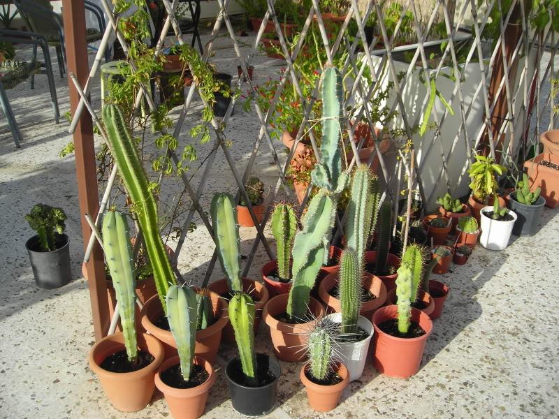 My cacti + succulents DSCN6235