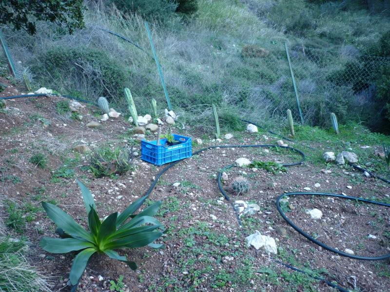 My cacti + succulents P1000070-1
