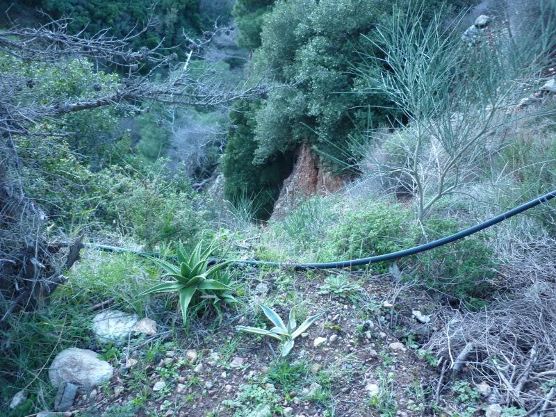 My cacti + succulents P1000071