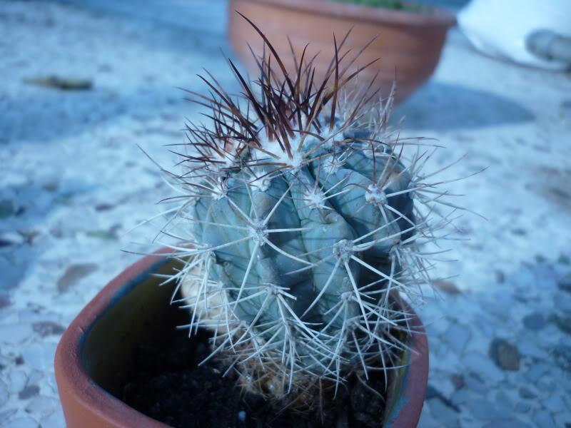 My cacti + succulents P1000129