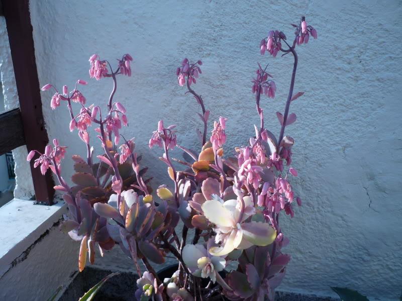 My cacti + succulents P1000141