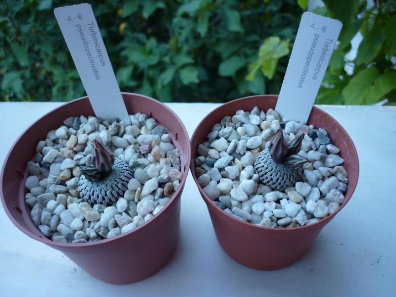 My cacti + succulents P1000200