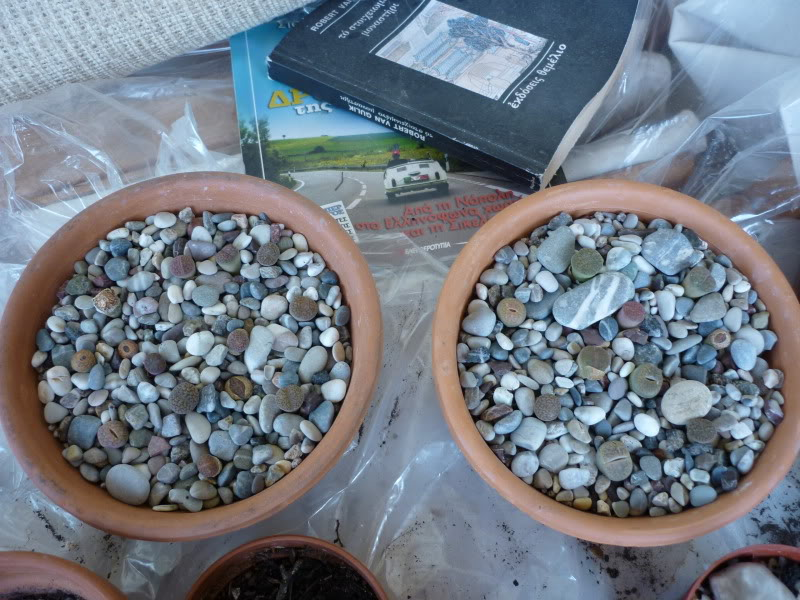 Lithops cultivation help needed - Page 2 P1000201