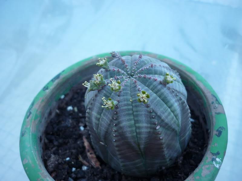 My cacti + succulents P1000217