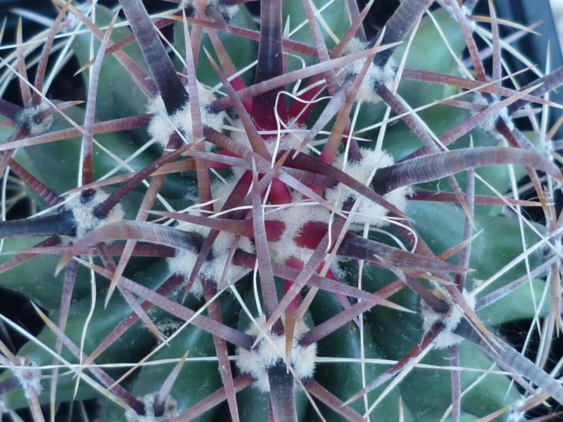 My cacti + succulents P1000237