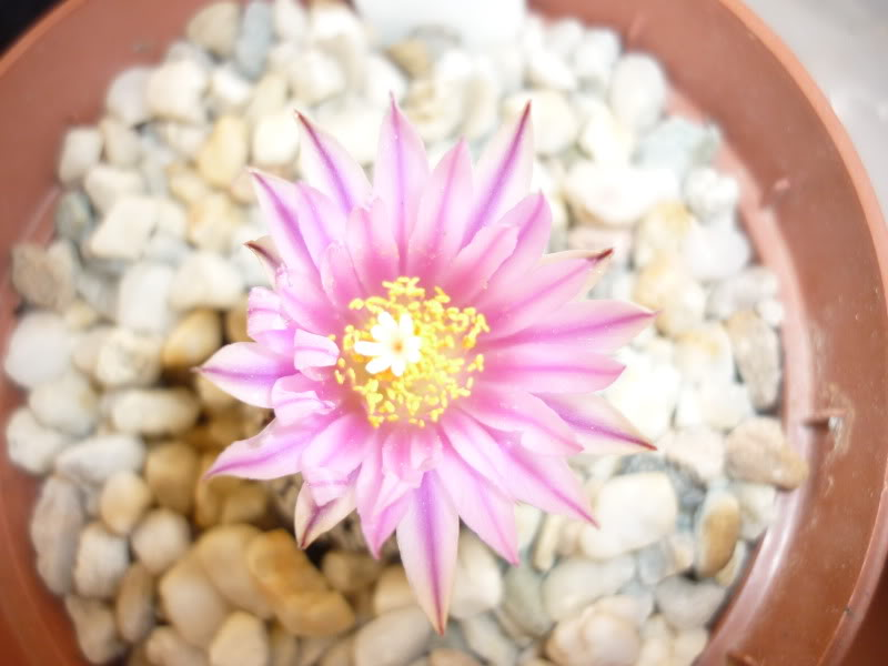 My cacti + succulents P1000302
