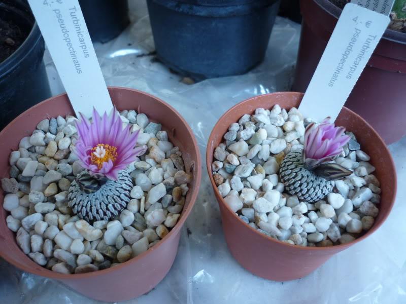 My cacti + succulents P1000303