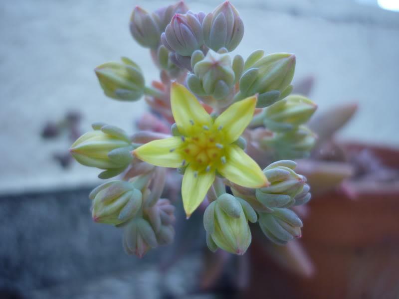 My cacti + succulents P1000337