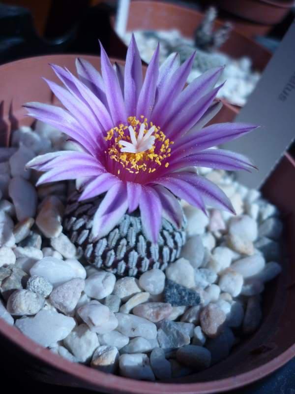 My cacti + succulents P1000346