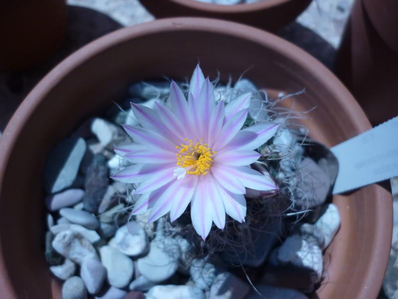 My cacti + succulents P1000367