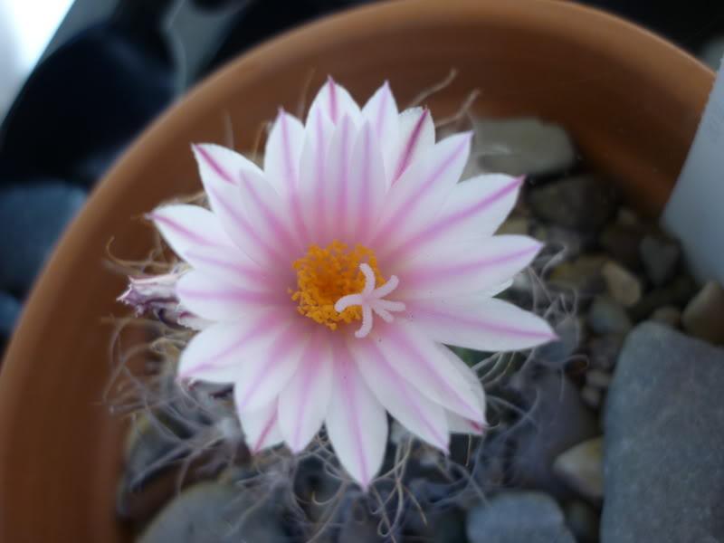 My cacti + succulents P1000386