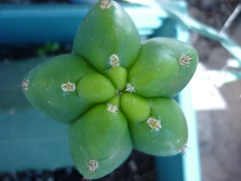 My cacti + succulents P1000404