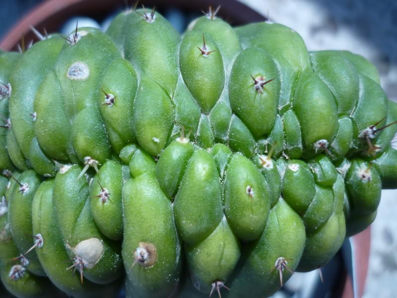 My cacti + succulents P1000406