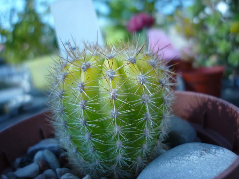 My cacti + succulents P1000425