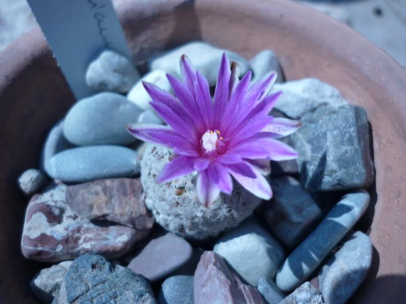 My cacti + succulents P1000440