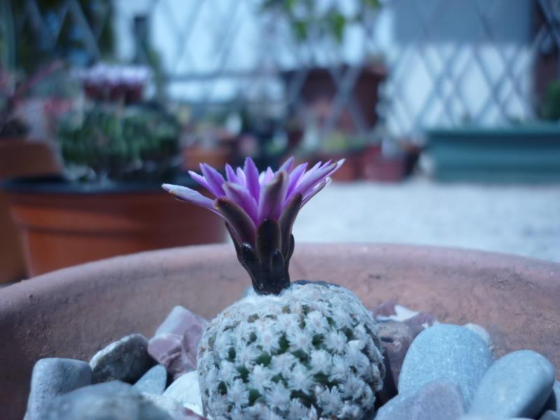 My cacti + succulents P1000441
