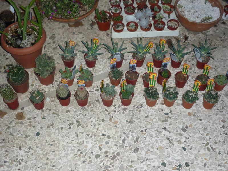My cacti + succulents P1000671