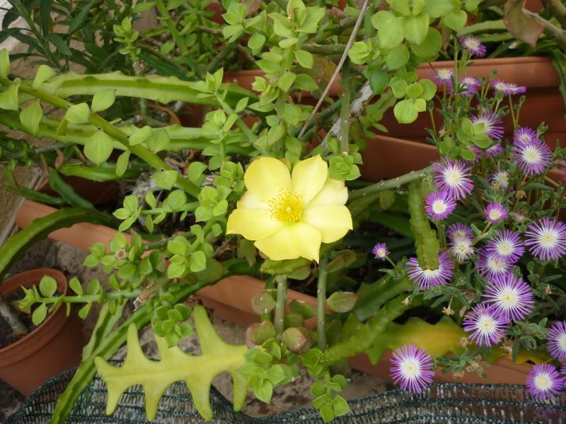 My cacti + succulents P1000673