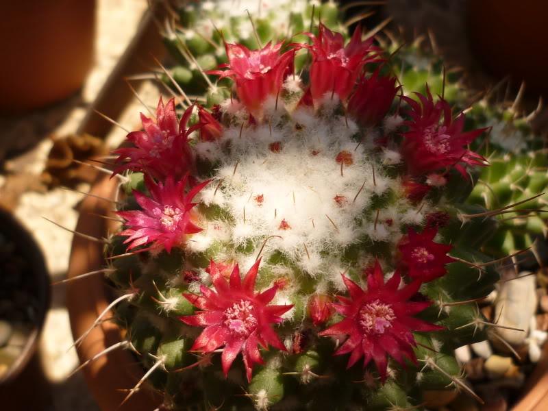 My cacti + succulents P1000674