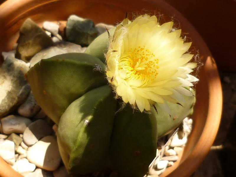 My cacti + succulents P1000675
