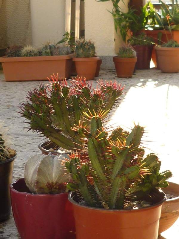Show us  your cacti - Page 6 P1010227
