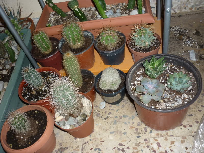 Show us  your cacti - Page 6 P1010282