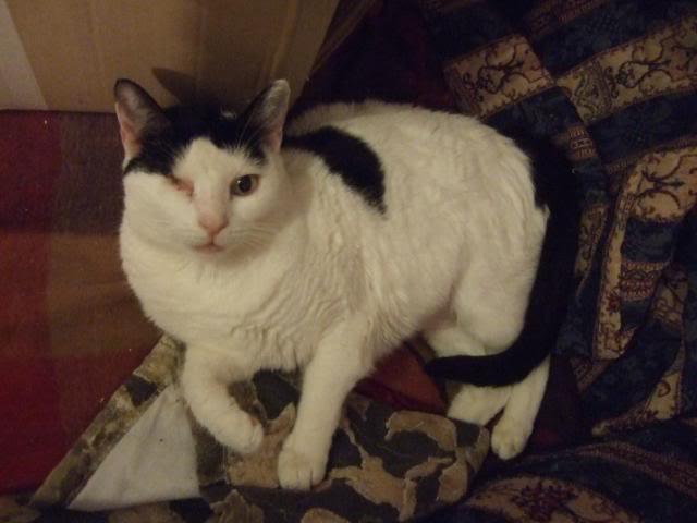 ¿Porque un gato enfermo? ¿de verdad crees que elegi un gato enfermo? 2010-03-2108Suzaku