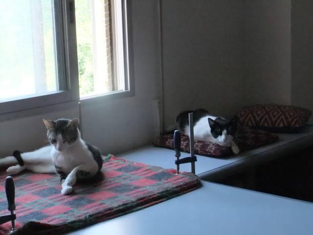Una Habitación Positiva (FeLV) 2011-07-161909