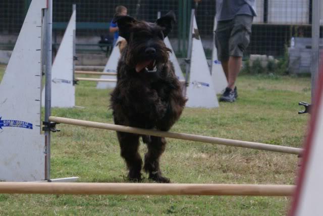 Our agility photos 272