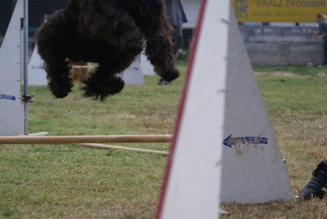 Our agility photos 273