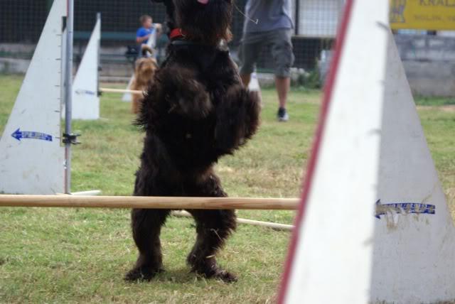 Our agility photos 274