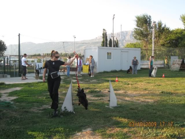 Our agility photos Picture066