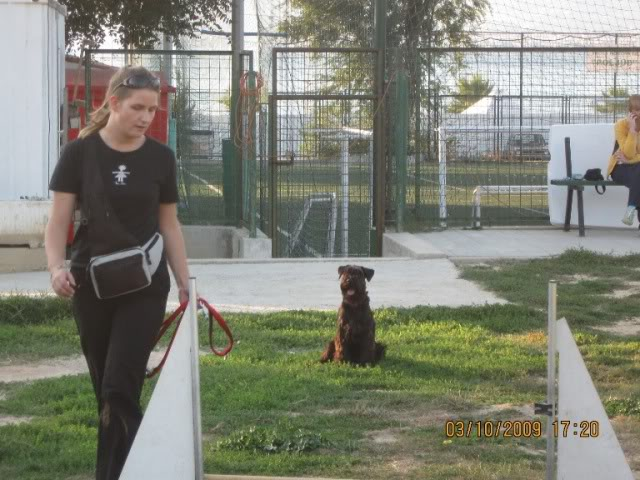 Our agility photos Picture075