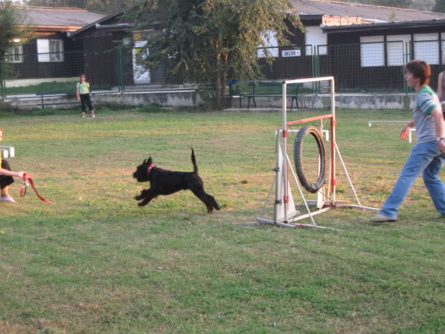 Our agility photos Willy9-1