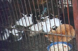 Asian/ Vietnamese and Korean markets Cat_p2