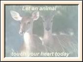 Stop Animal Abuse Banners Deerbutton