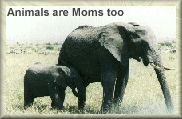 Stop Animal Abuse Banners Elephant