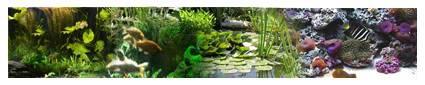Aquariums-Poissons et invertébrés d'eau douce et saumâtre Essaie3