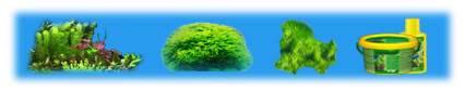 Plantes Aquatiques Plante