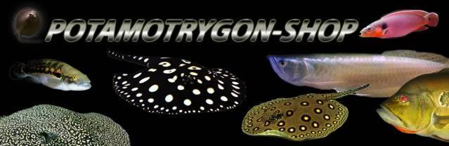 Présentation de Potamotrygon  Shop Potamotrygon-frenchshop