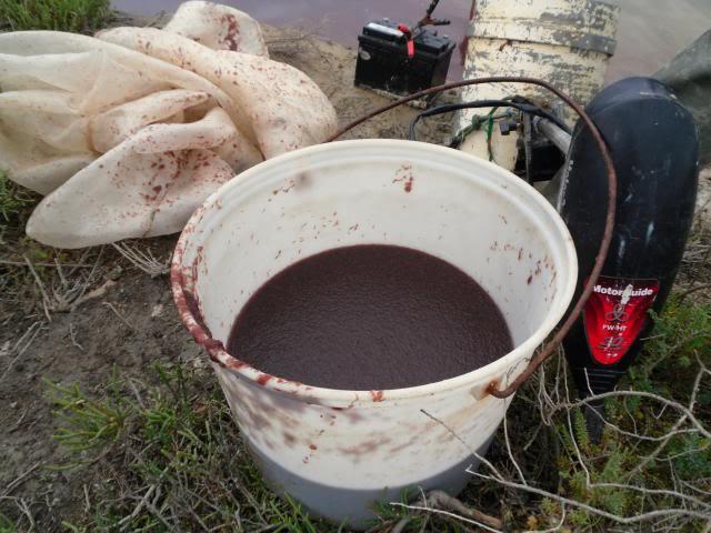 Camargue pêche - Spécialiste de la nourriture vivante pour poissons Camarguepeche