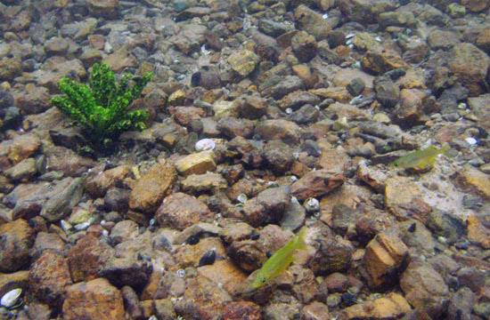 lake matano Sulawesi-matano-10