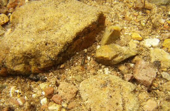 projet sulawesi crevettes Sulawesi-matano-25