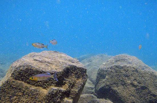 fishes Sulawesi Sulawesi-towuti-15