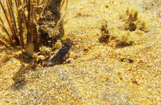 projet sulawesi crevettes Sulawesi-towuti-44